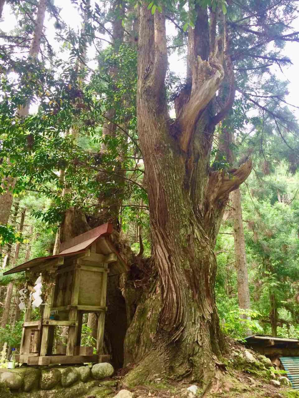 株杉の森はパワースポット