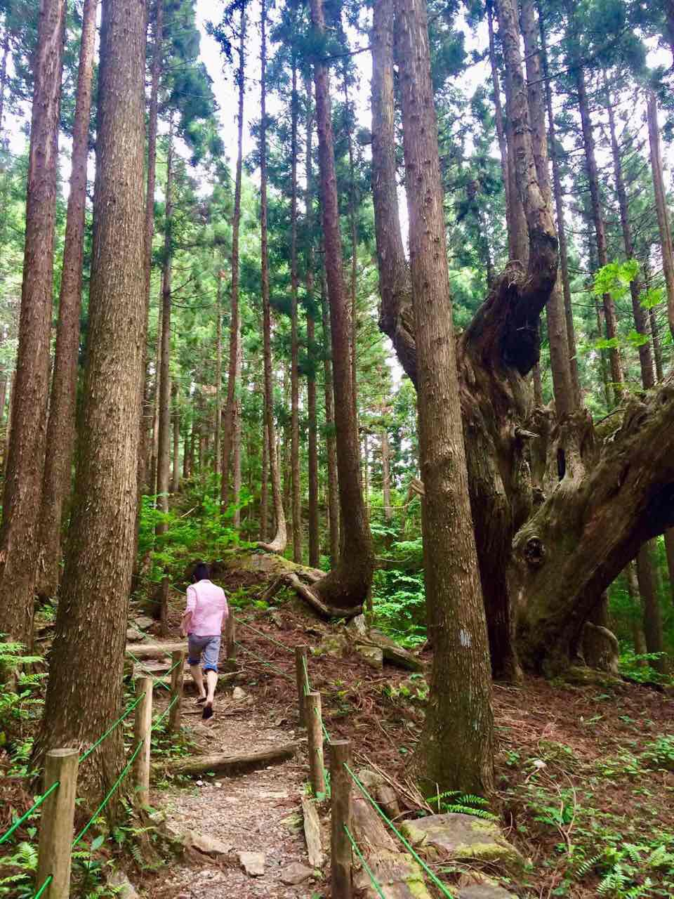 株杉の森を散策
