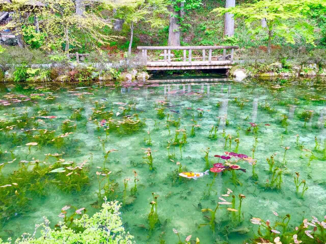 絵画みたいな池