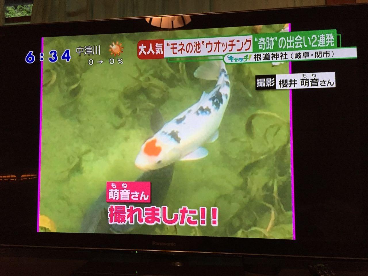 モネの池ハートの鯉