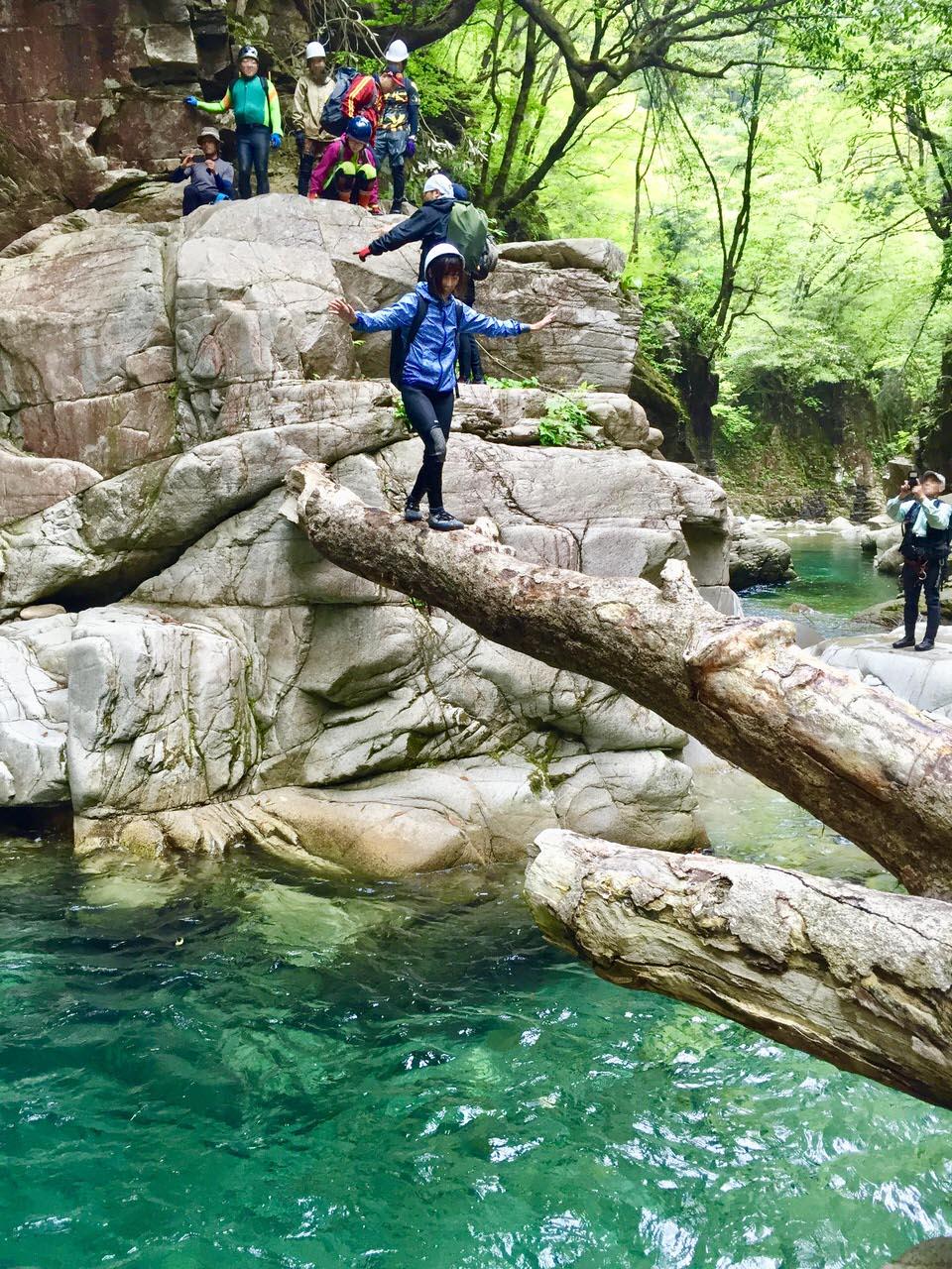 大釜の自然の木の橋